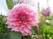 Le jardin de Sylvie en photos