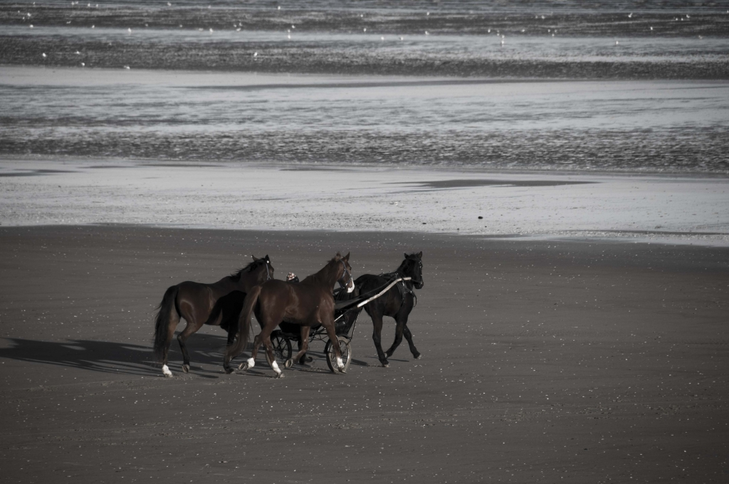 Ballade sur la plage 1010211239081025396962453