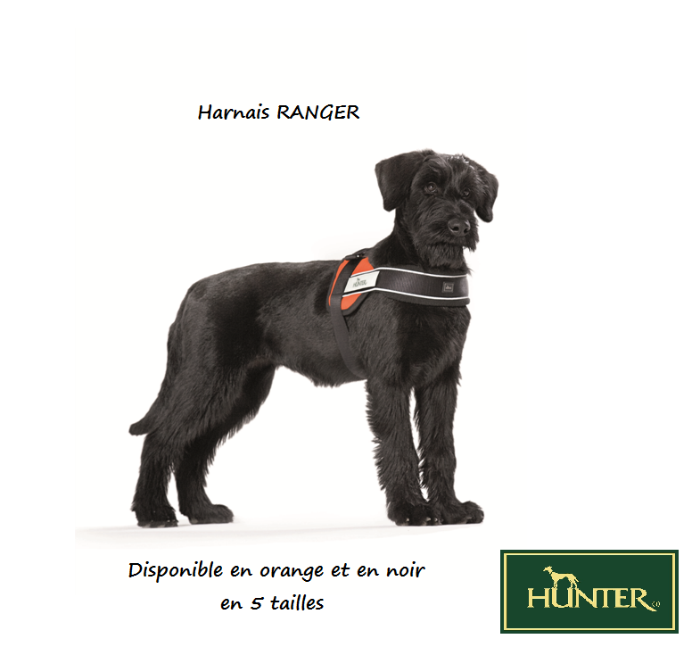 Quel(s) collier(s) pour votre chien? - Page 6 101107071739947877075091
