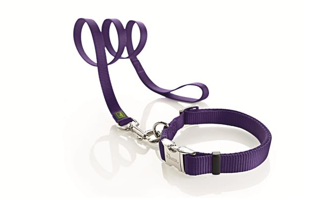 Quel(s) collier(s) pour votre chien? - Page 6 101107071739947877075092