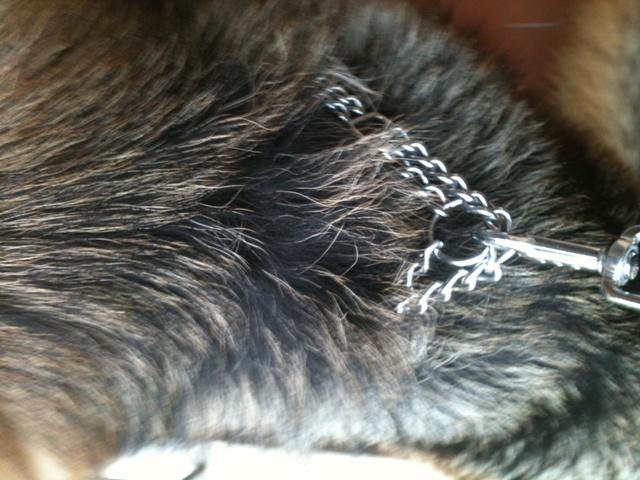 Quel(s) collier(s) pour votre chien? - Page 6 101107111036947877070311